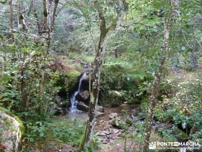 Parque Natural Sierra de Cebollera (Los Cameros) - Acebal Garagüeta;parques naturales de la rioja t